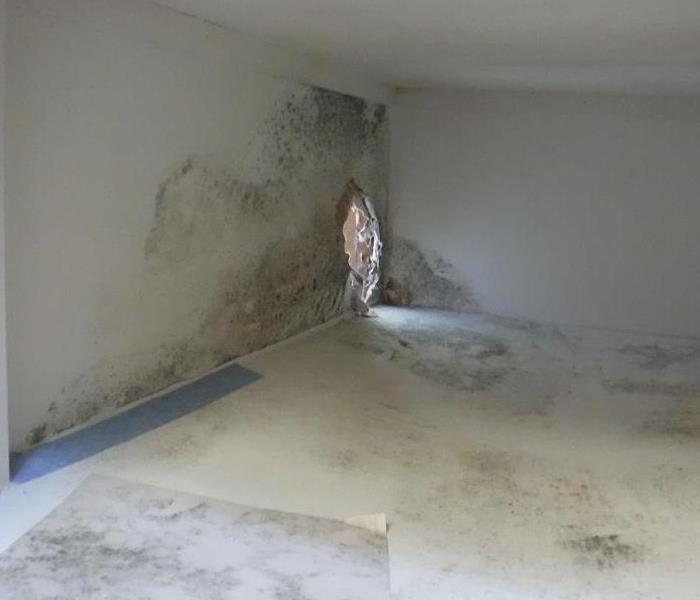 Mold Remediation When a little unseen water turns into a big problem