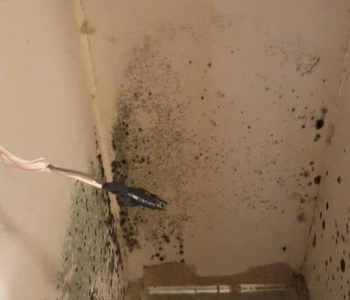 Mold Remediation Fresno County Residents:  Follow These Mold Safety Tips If You Suspect Mold